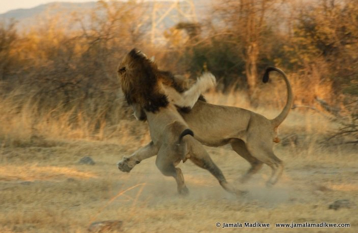 Naledi Male Battle at Jamala